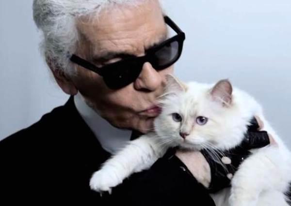 年收入高達一億?這隻貓咪教會我們:跟對主人比什麼都重要!