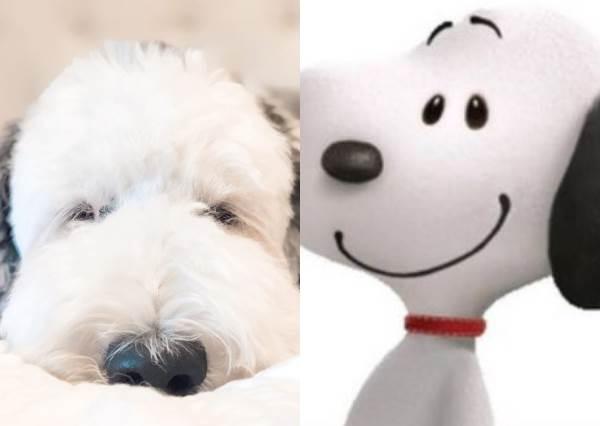史奴比真有其狗!「混血狗狗」根本是史奴比,白色的臉龐黑色垂耳萌翻了~不挑食的牠居然連這個也吃!