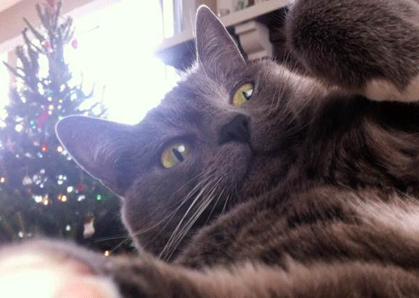 《10隻熱愛聖誕節的喵星人》想盡辦法刷存在感的貓咪,究竟是小幫手還是小惡魔?