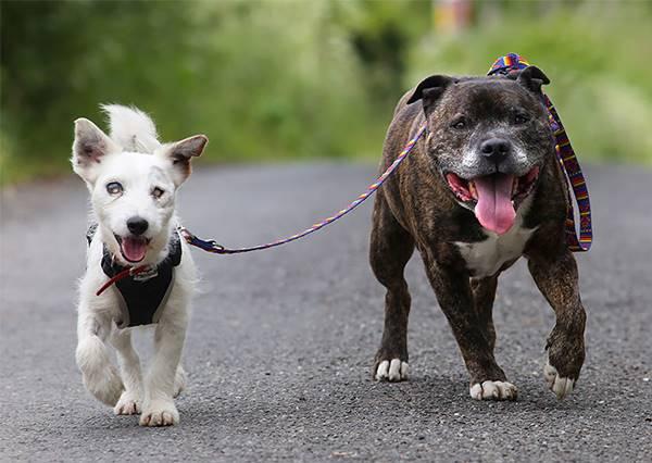 情比金堅!英國失明狗流浪街頭,導盲狗友貼身相伴不離不棄