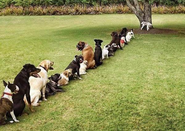 這些「萌寵排隊」的可愛照片在網路上爆紅,因為…人類也能這麼守秩序就好了!