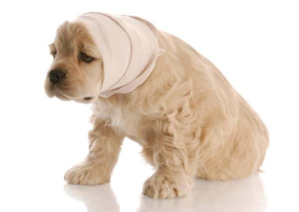 搶救小生命!身上誤沾了焦油的流浪小狗奄奄一息.