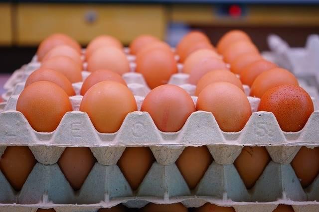 賣場永遠不會說的雞蛋生產過程,養雞場祕辛大公開
