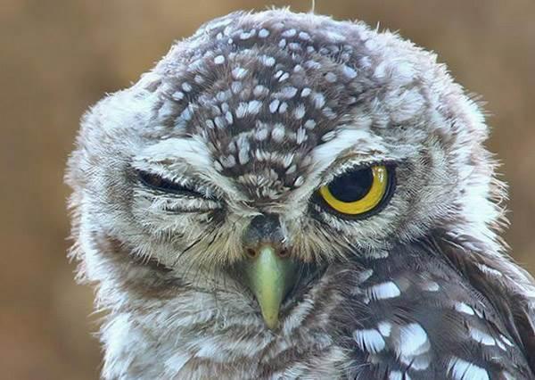 拍照不會擺表情?專業賣萌的貓頭鷹教你如何裝可愛!