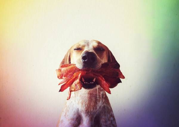 就算只有一個月也好,癌末流浪狗被領養,而且過得非常開心:D