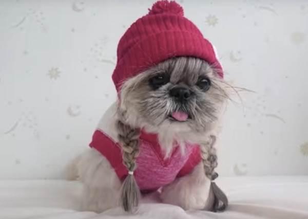 都說日本女孩最會綁頭髮,現在連她們養的狗也是每天換髮型!?