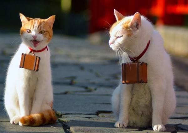 [我跟喵星人的輕旅行]愛貓人尖叫不停的必去景點