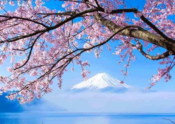 【櫻花也有冷知識!】你知道日本哪個城市的人,賞花預算最高呢?