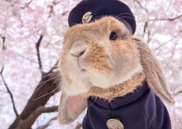 穿上制服來到櫻花下~「兔界歐爸」稱起少女們的各種制服幻想!