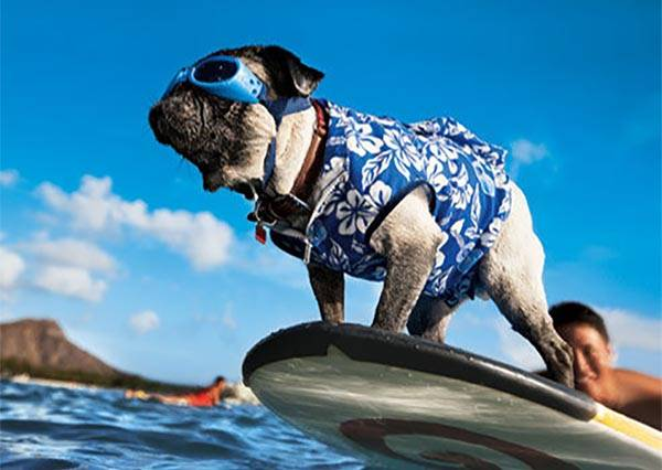 夏天誰都抗拒不了水 動物玩水萌翻天