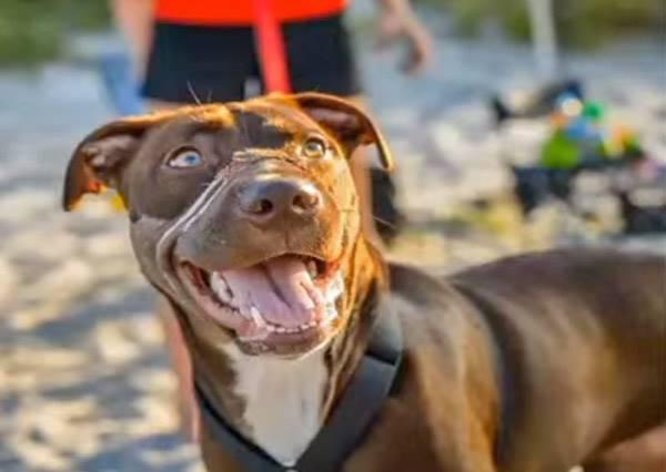 一隻不幸的狗狗如何成為家喻戶曉的大明星呢?