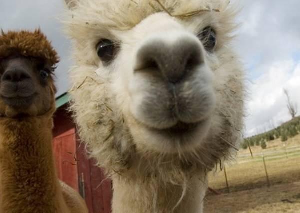 我一見你就笑 讓你瞬間心花開的九張特搜動物臉孔