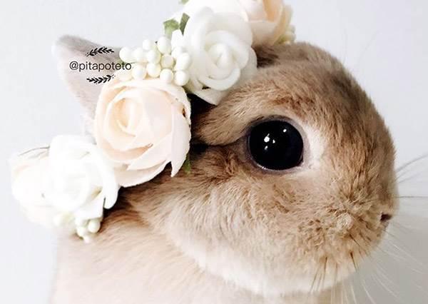 花環只有姊稱得起!清新小萌兔的日常生活照,隨便一張都是日雜VIVI風呀!