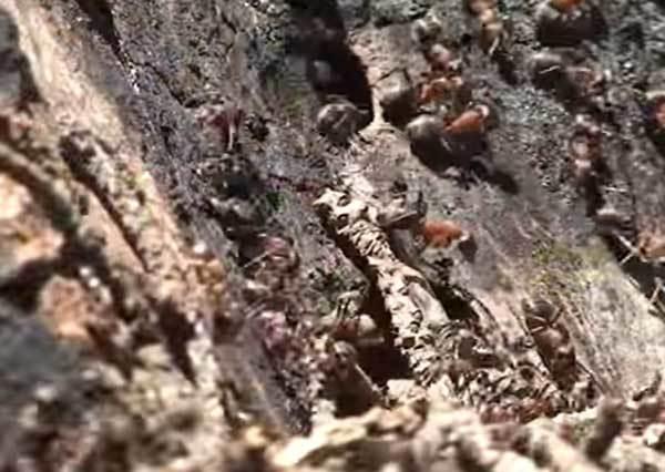在戶外要拿紙盤、在家裡要拿薑水?螞蟻大軍來襲,7招讓你跟螞蟻們徹底說再見!