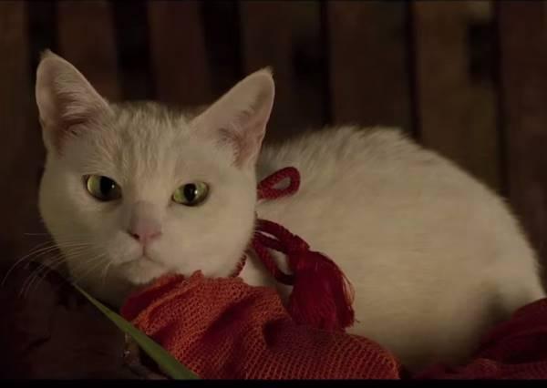 萌寵才是一哥 盤點專門治癒人心的毛小孩電影!