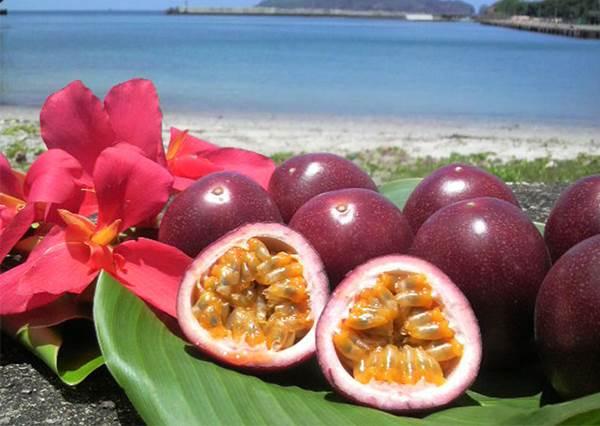 數量限定的「超商飲料」!尤其水果口味的田梨&百香果最高人氣,夏天喝超爽口❤