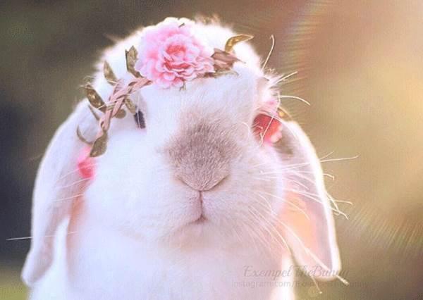 大眼垂耳的賓尼兔分分鐘都楚楚可憐的模樣,就算偷吃草莓也捨不得罵阿!