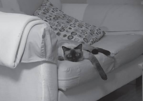 被說冷眼的貓咪心中是這樣想:沒有白眼就不錯啦!