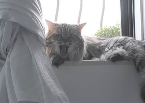 好奇心絕對殺不死貓咪,請放棄吧!