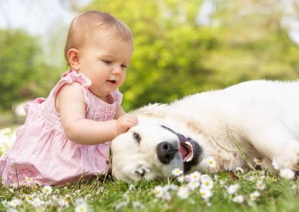 地球人注意!小孩跟狗狗組合徹底讓你融化成一灘水
