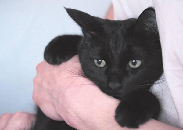 幸好貓咪不是戀人,謝天謝地!