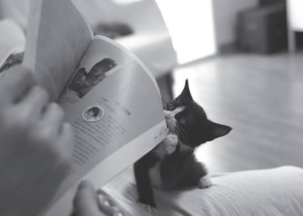 貓咪守則第十四條「只要人類看書就坐在書上!」