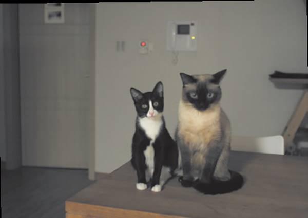 以為貓咪對人類之流沒有半點興趣,但其實貓咪的耳朵是向著你的!