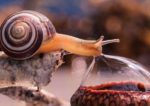 你一定沒想到蝸牛吃泡泡的樣子竟那麼療癒!小動物日常令人感動瞬間的照片集