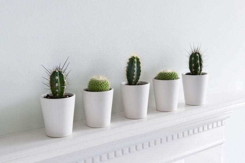城市女人們,妳該考慮在家種這5種超好養的植物!