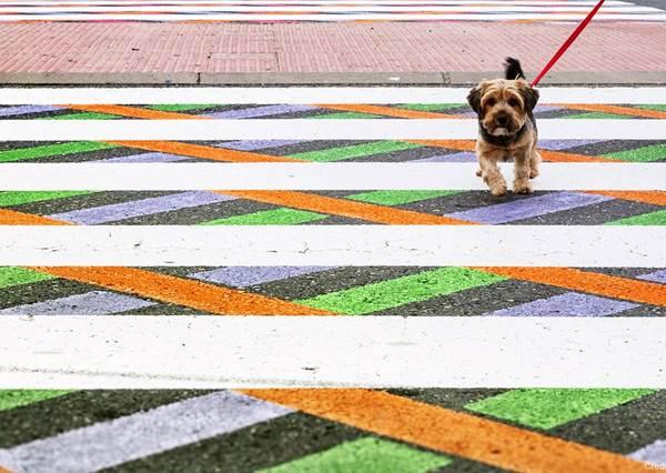 看完你大概會想請各縣市交通局跟進!超舒壓「彩虹馬路」讓經過路人的阿雜感全消失阿!