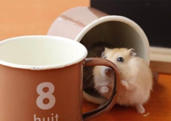 【現在正流行看倉鼠屁股的照片!真的好療癒喔!】倉鼠應該覺得我們人類很有事! XDD ~