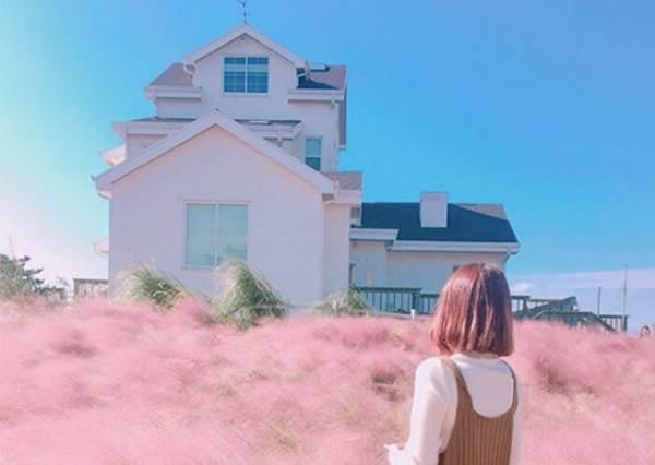 【來去濟州島 ! 這片粉紅芒草也太美 ! 】少女心又大爆發惹~! 快點約閨蜜們出國拍寫真囉~!