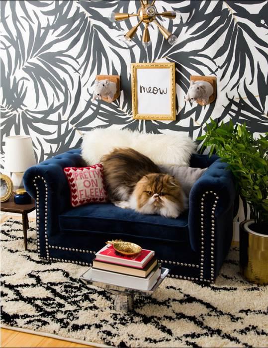 羨慕忌妒恨! 這隻貓的房間可能比妳我的都美