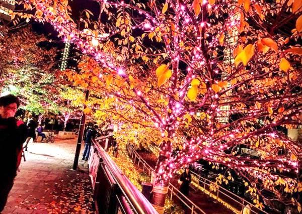 日本今年這條街是粉紅色的!用42萬顆LED燈打造的夢幻「冬之櫻」,超浪漫櫻色燈海必去