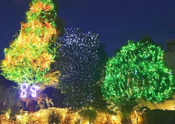 花生米家族在耶誕樹上熱舞給大家看!史努比博物館推「聖誕燈海」,一整片也太夢幻❤